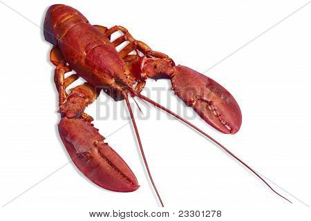 Red Lobster Isolated