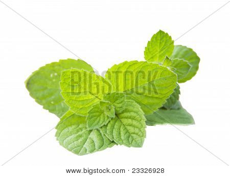 Mint peppery. Mentha piperita