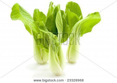 Green pok choy