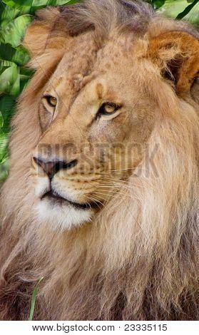 Lion among palms