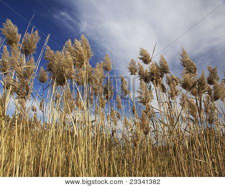 Tall Grasses