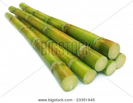 Close up of sugar cane