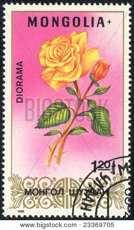 Diorama Rose