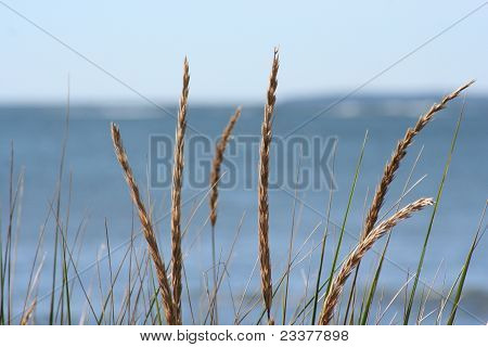 Weeds by the sea