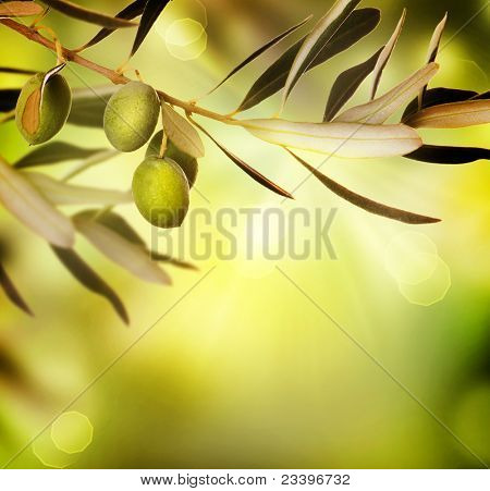Olive border design.Food background