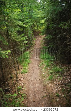 Trail In A Dense Forest