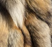 Fur Background Of Tails Of A Red Fox. Cruelty To Animals, Killing Animals For Profit. Protectors Of  poster