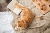 pets, hygge and domestic animal concept - red tabby cat lying on blanket at home in winter poster