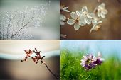 Spring, Summer, Autumn, Winter. Four Seasons. Four Season Collage With Branshes And Flower In Landsc poster