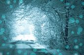 Forest Road Covered With Snow. Magical Snowy Road poster