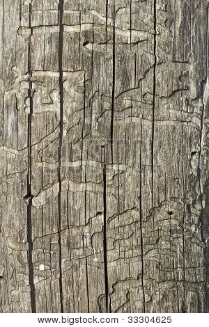 Old Wooden Damaged Surface