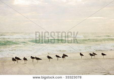 Textured Painterly Beach Scene at Sunset with Birds