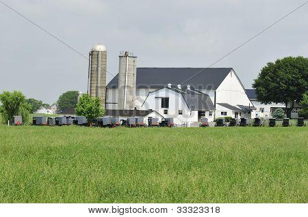 Buggies Amish Gathering