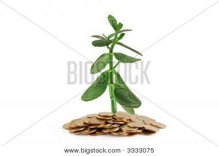 Moneys Tree