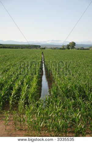 Corn Field Ditch