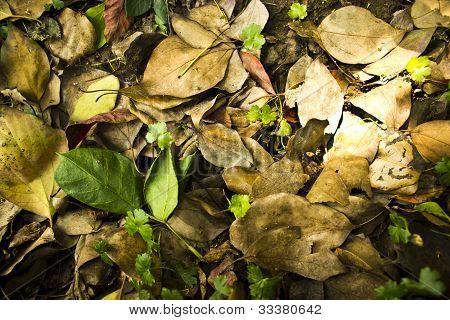 High definition leafs