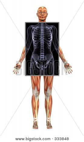 Female Muscle System With X-ray