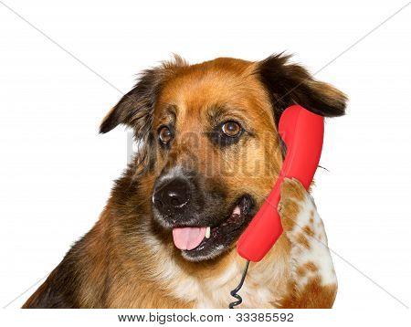 Dog Is Talking On Telephone