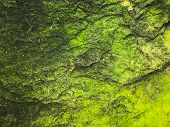 Green Moss Grows On The Right Surface. Moss Grows On Wet Areas. Green Thallophytic Plant. poster