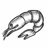 Shrimp Delicious Sea Animal Monochrome Vector. Fresh Or Boiled Shellfish, Prawn Or Shrimp. Crustacea poster