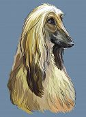 Colorful Afghan Hound Vector Hand Drawing Portrait. Isolated Vector Illustration On Blue Background. poster