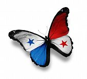Panamanian Flag Butterfly, Isolated On White
