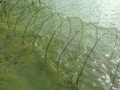 Shrimp Trap Placed In Shrimp Ponds To Trap Shrimp Taken From The Pond. Trap Made Of Nylon Rope The S poster
