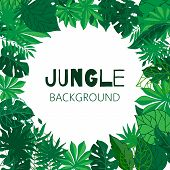 Tropical Jungle Frame, Vector Illustration. Green Exotic Foliage Background With Palm Trees And Leav poster