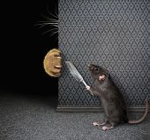 Rat With Knife Hides From Cat 2 poster