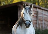 Head Shot Closeup Of A Bneautiful Young Mare In Sunset Mood At Rural Animal Fam poster