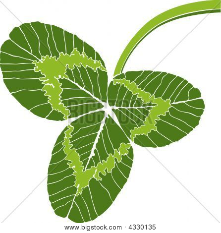Green Clover Leaf