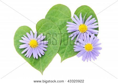 Love Concept: Pair Of Hearts From Leaves And Flower For Happy valentine day or card.