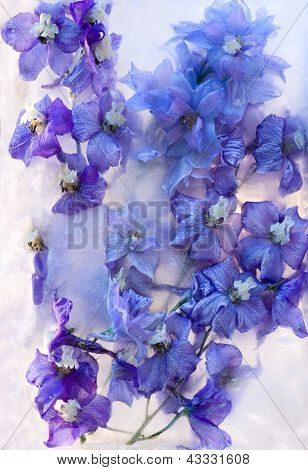 Frozen    Blue Delphinium Flower