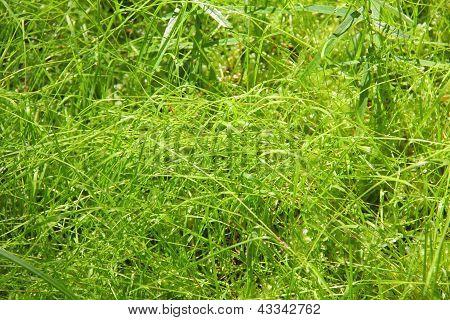 Grass. Texture.