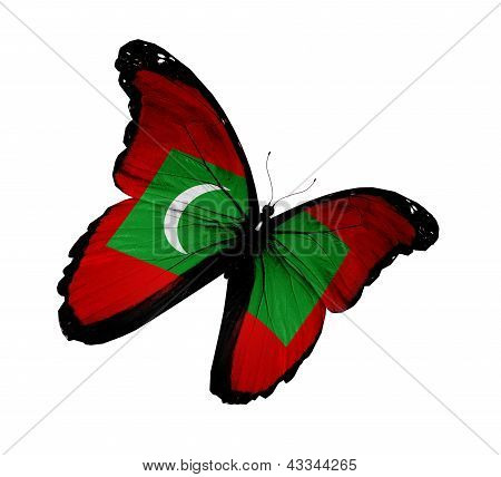 Maldivian Flag Butterfly Flying, Isolated On White Background