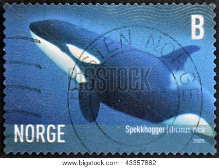 A stamp printed in Norway shows an orcinus orca