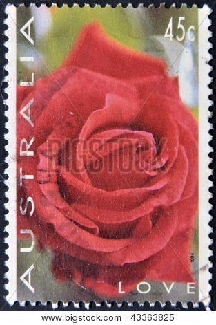 A stamp printed in austrlia shows a rose love