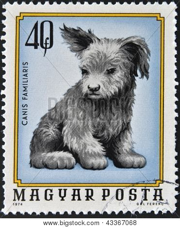 HUNGARY - CIRCA 1974: A stamp printed in Hungary shows Canis Familiaris, circa 1974
