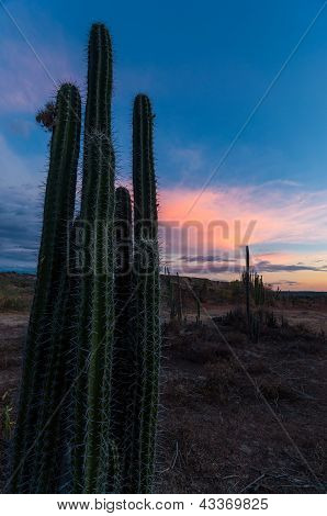 Cactus And Pink Clouds