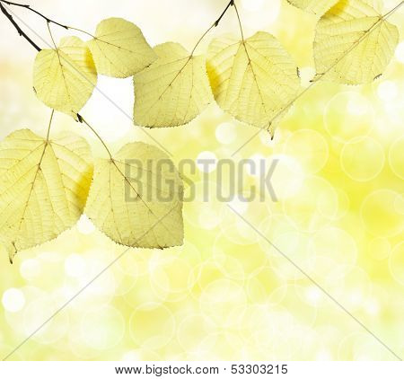 autumn  background in a sunny day