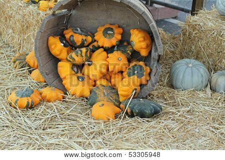 bucket with golden gourds