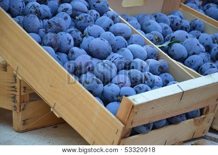 Plums at farmers market