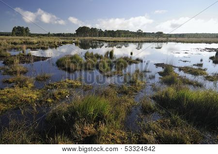 Bog Pools at Thursley Common