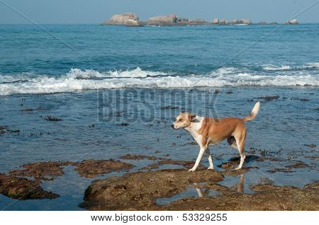 Dog Living Near The Ocean