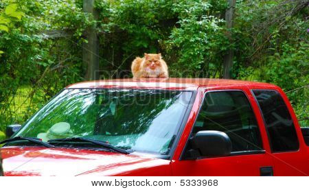 Cat On Top Of A Car