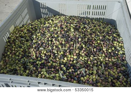 containers with green olives. Fruit and vegetable market.