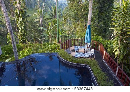 Swimming Pool In Forest