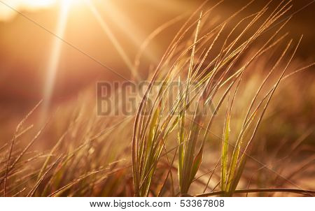 Abstract grasses in the late sun