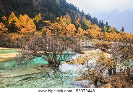 Calcification Ponds In Autumn Forest