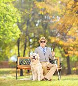 pic of blind man  - Senior blind gentleman sitting on a wooden bench with his labrador retriever dog - JPG